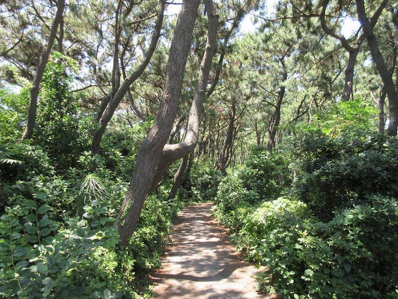しおさいの森で散歩