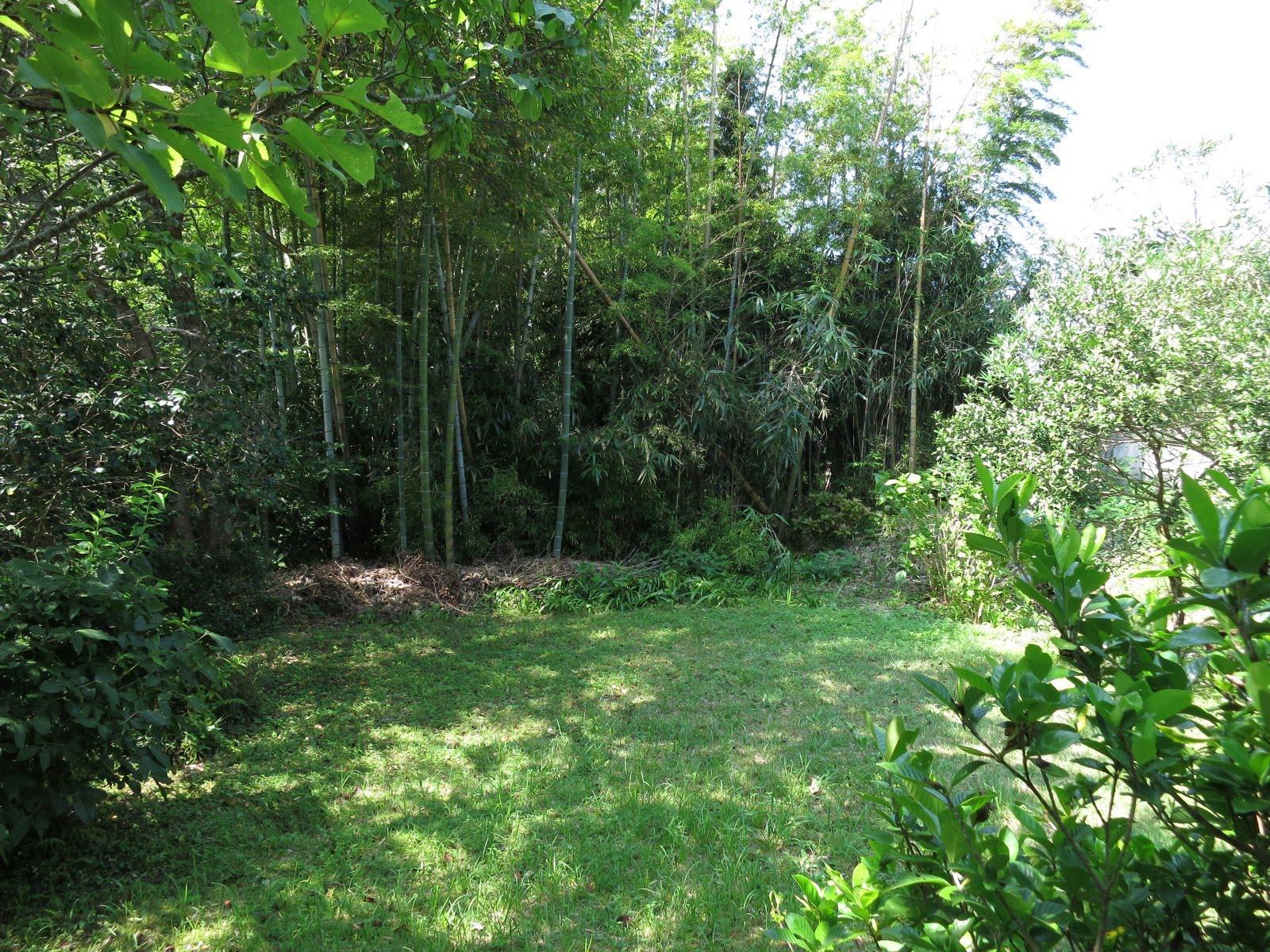 そびえたつ竹の壁