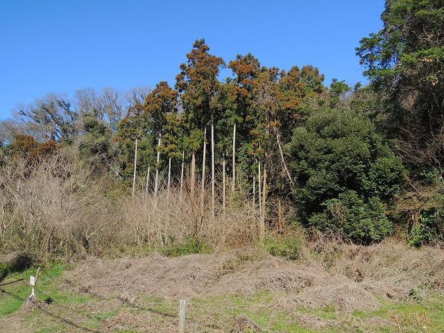 高く伸びた木が残る