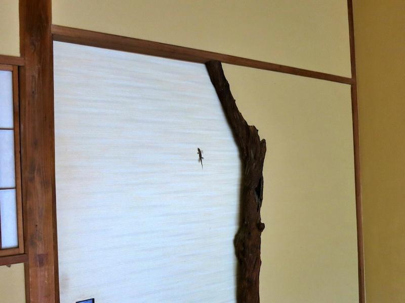 扉を閉めたその時、ヤモリが慌てて、私も慌てる!