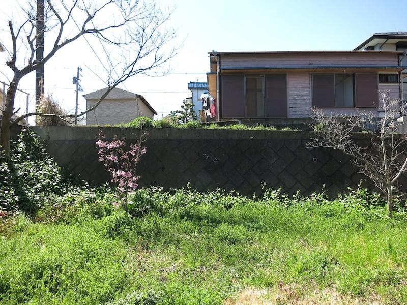敷地内から道路側を見る|梅が咲く