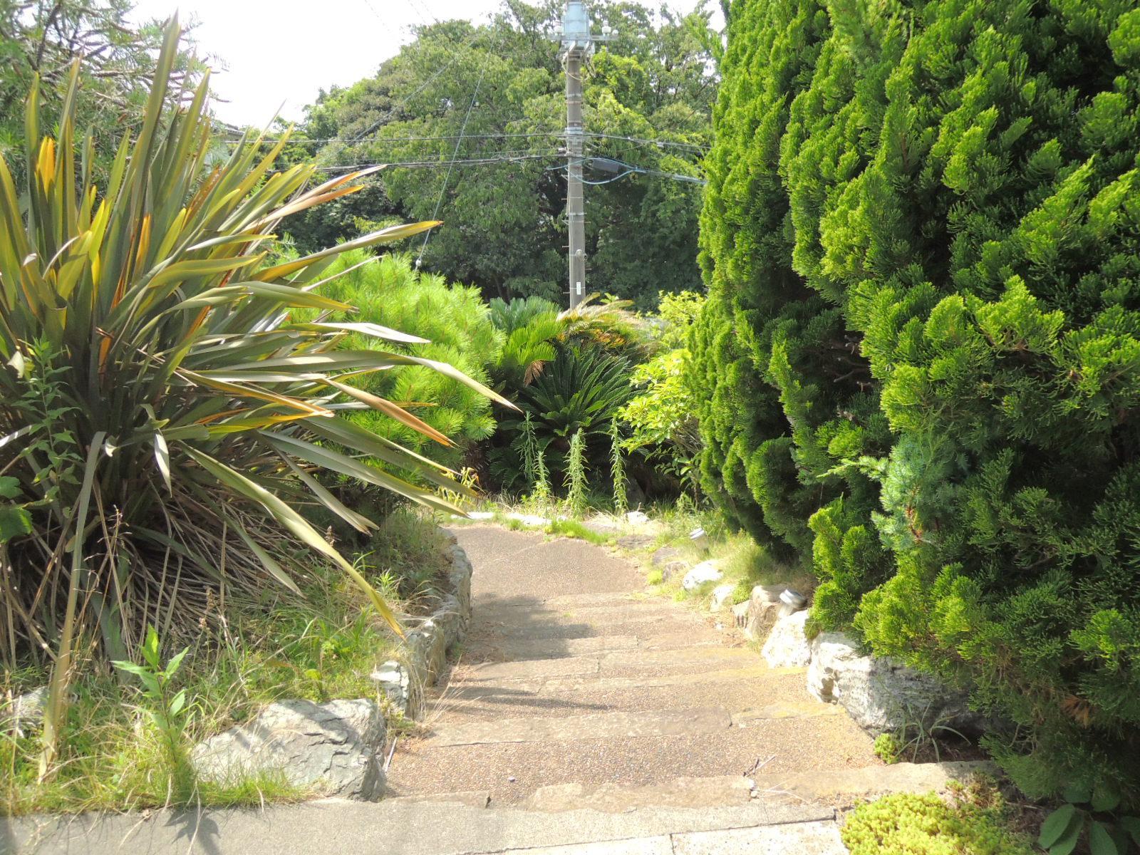 門扉から玄関までのアプローチ。低い松の木の間を抜けて。