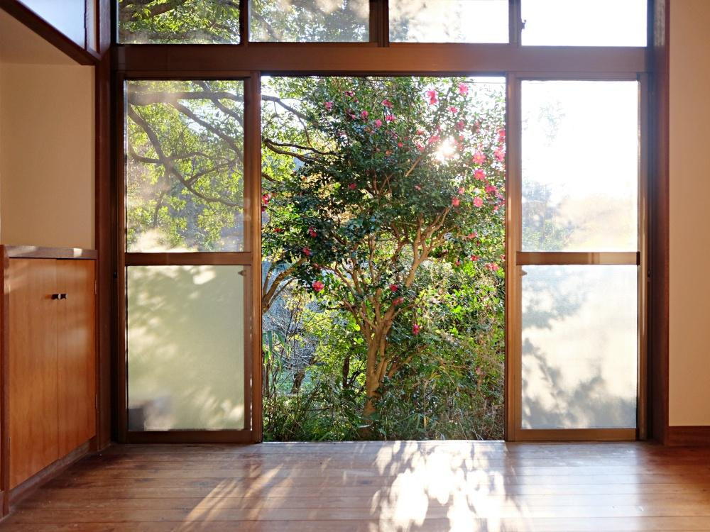 1階ダイニング 目隠し兼日除けな植栽が良い雰囲気です。