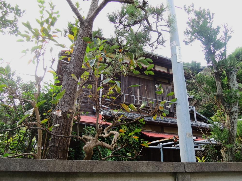 敷地脇道(東側)から建物を見上げたところ