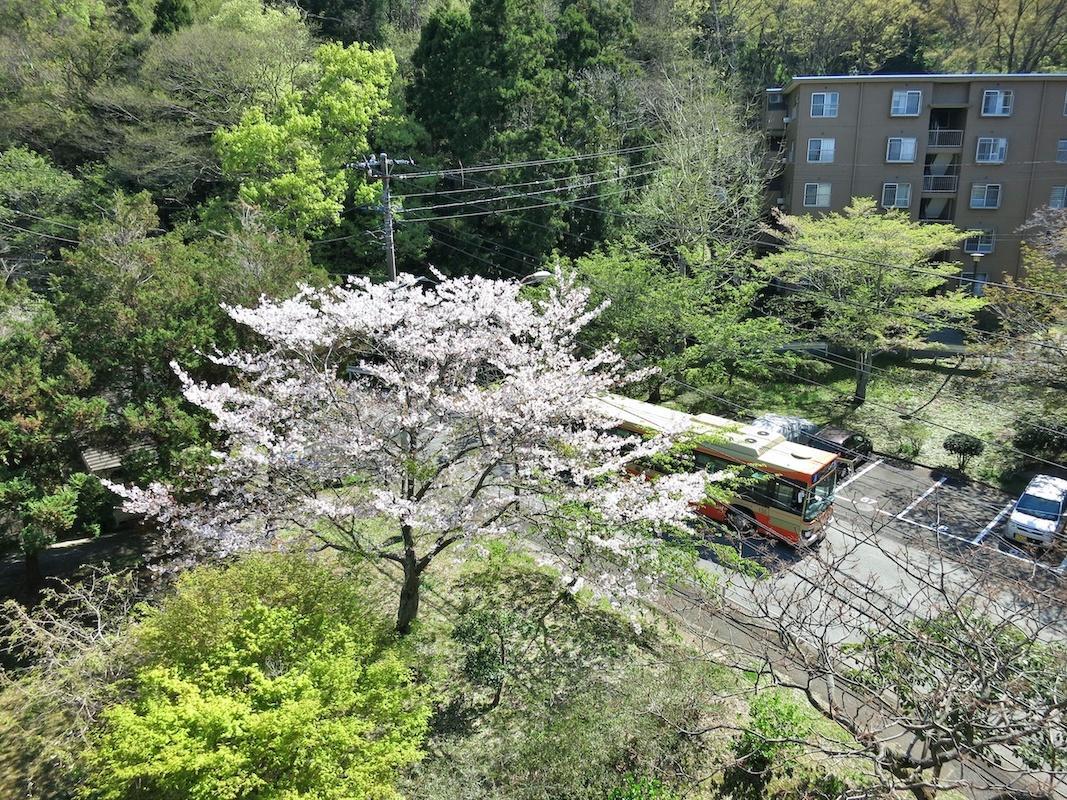 バスが桜道をのぼる眺め(写真はバス下ってます)