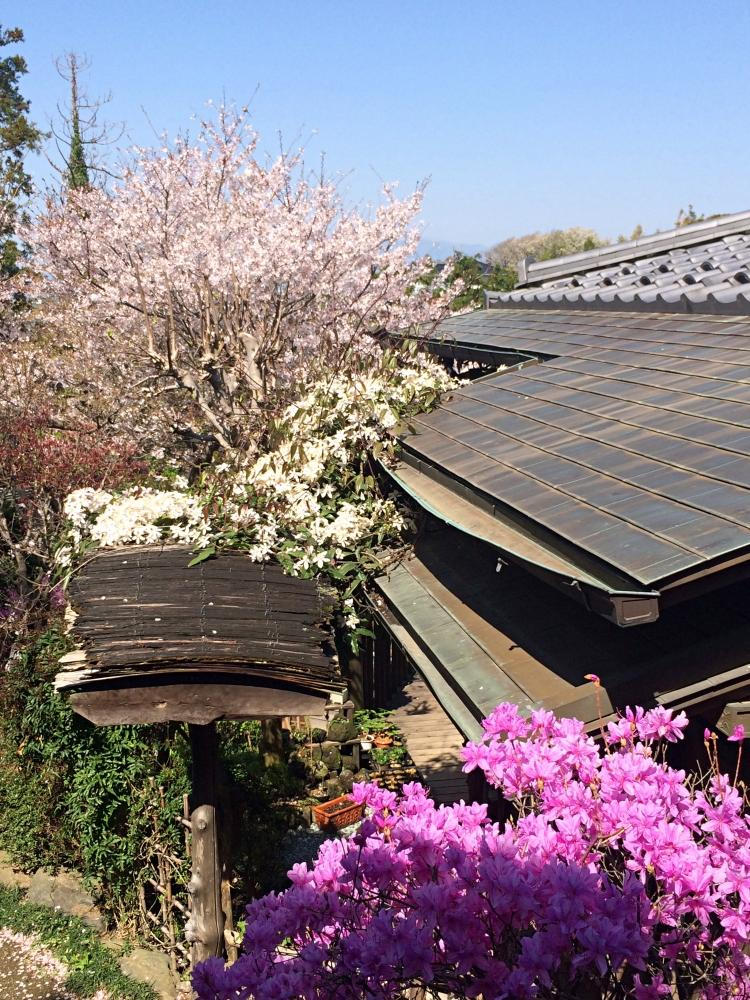 敷地にはソメイヨシノが2本、枝垂れ桜が1本、山桜が3本。春には溢れんばかりの花が咲き誇ります。