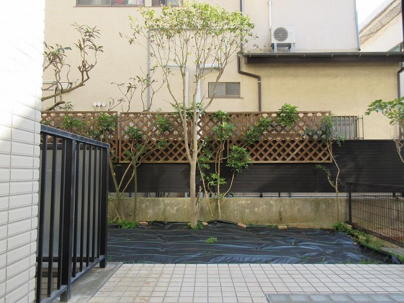 庭には、ハーブや柑橘系の木を植えるのが茅ヶ崎流でしょうか