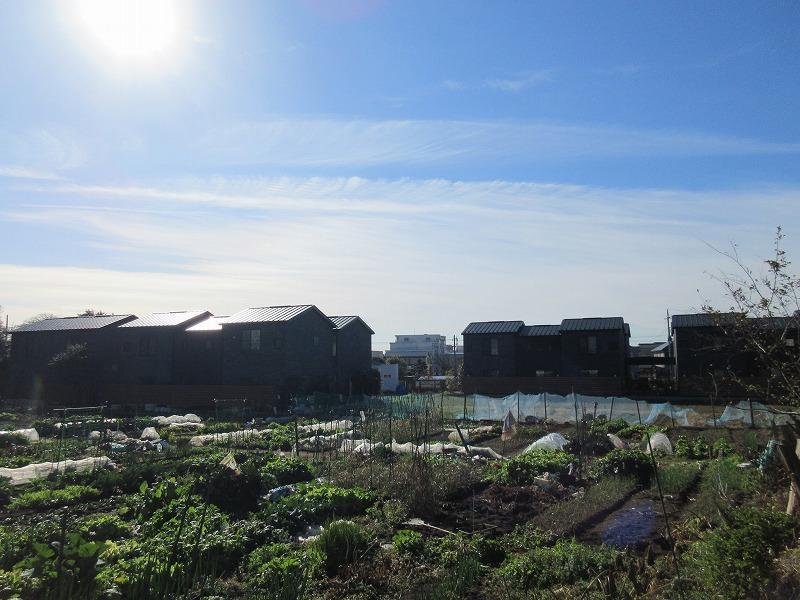 のどかな畑の先にある建物群は村感がある