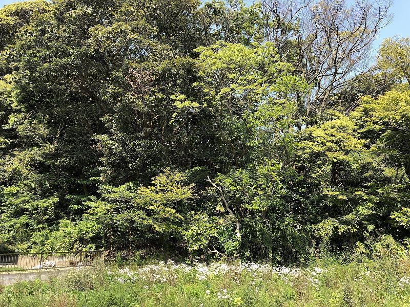 物件東側は大きな木に囲まれています。