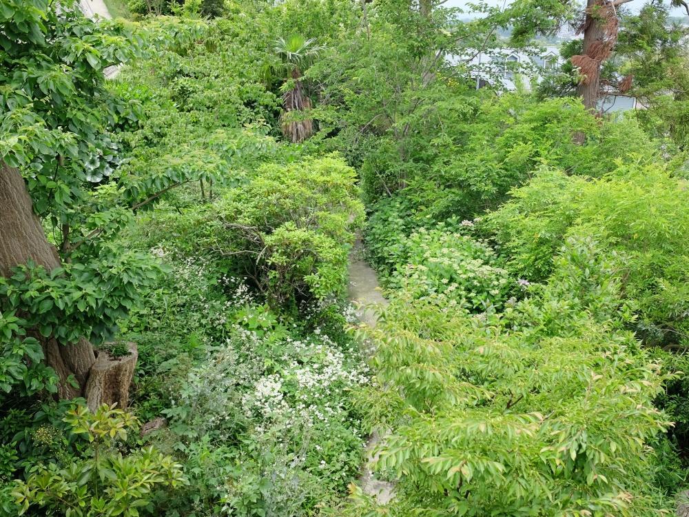 春〜夏はモリモリと。さっきの小道を2階から見下ろしたところ。