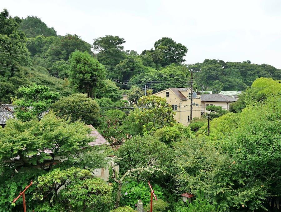 2階からの眺望|木々の緑に包まれる