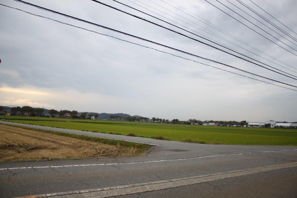 近くの県道から見る景色。広大な水田と桜並木道