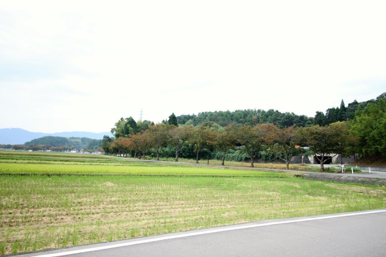 約10キロにわたり約2,000本の桜並木が続いています。