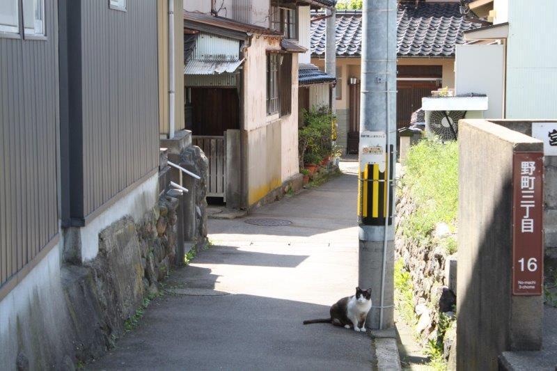 家へ向かう道。まち猫と遭遇。