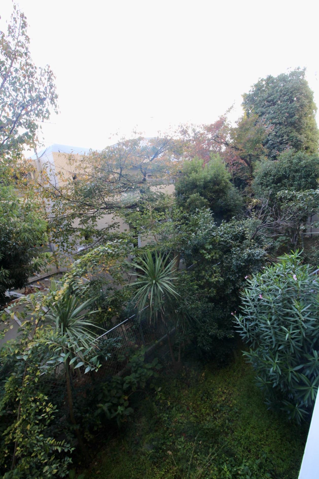 バルコニー眼下に多様な植物や立派な樹木に囲まれた専用庭