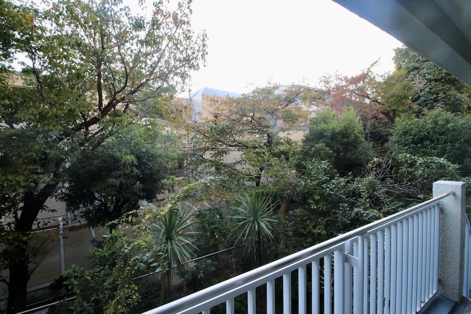 バルコニーから庭の木々を望む
