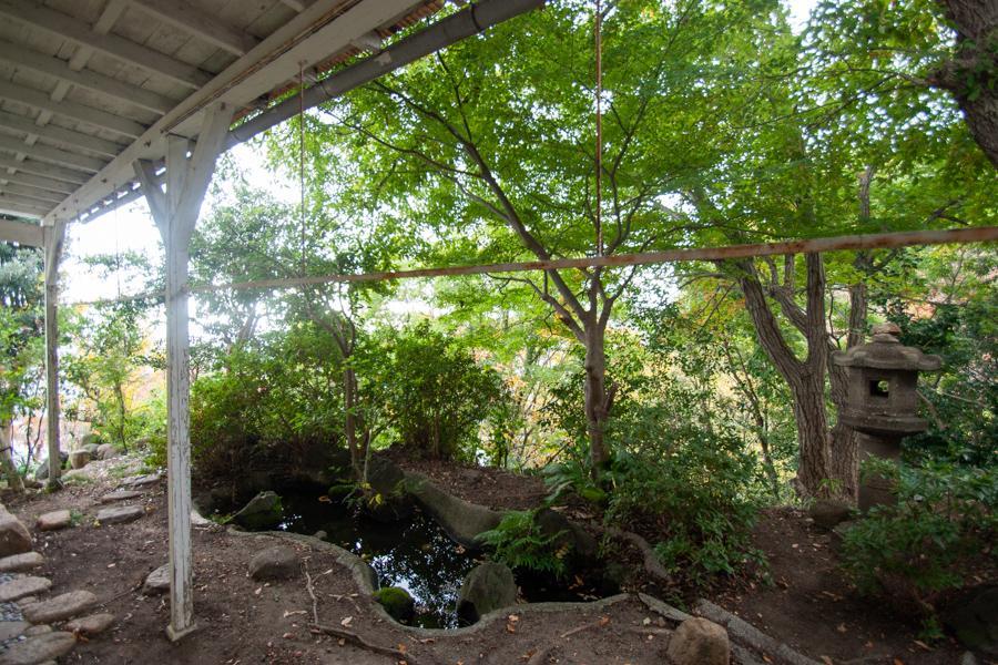 西側の庭はもはや森の中にいるよう