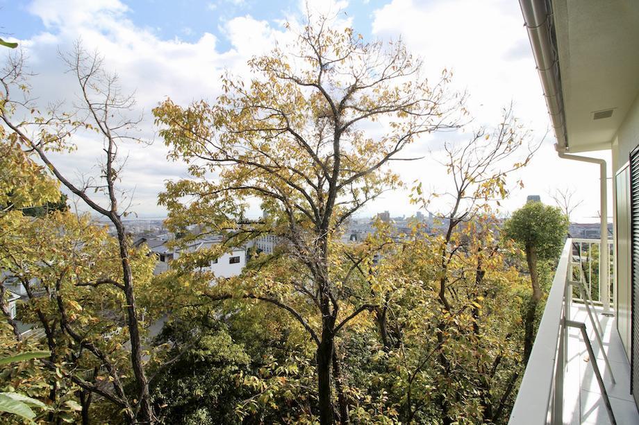 2階バルコニーから森。空も広い。