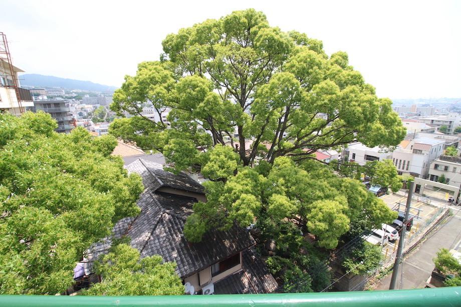 見下ろすとお隣のおおきな木