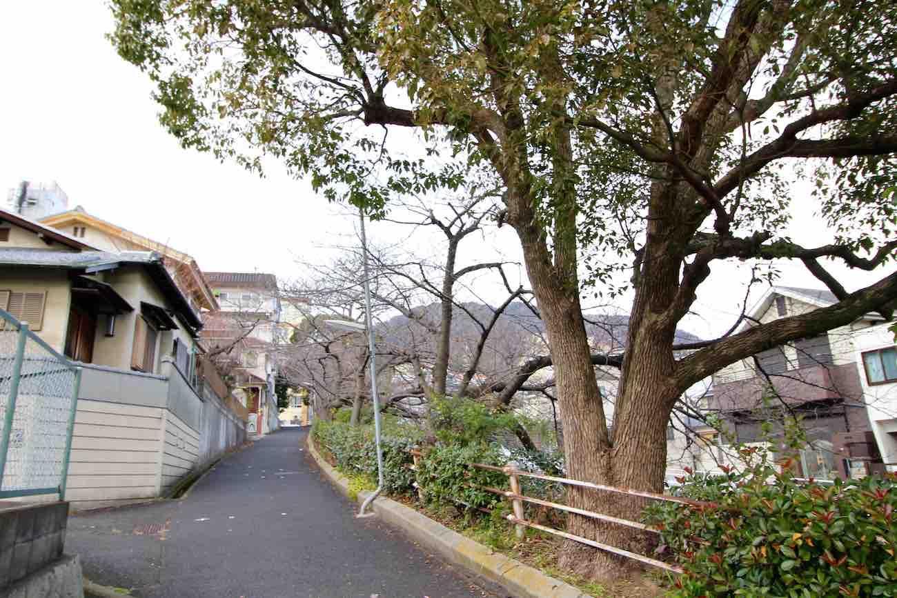 当マンション横川沿いの桜並木(春が待ち遠しい...)