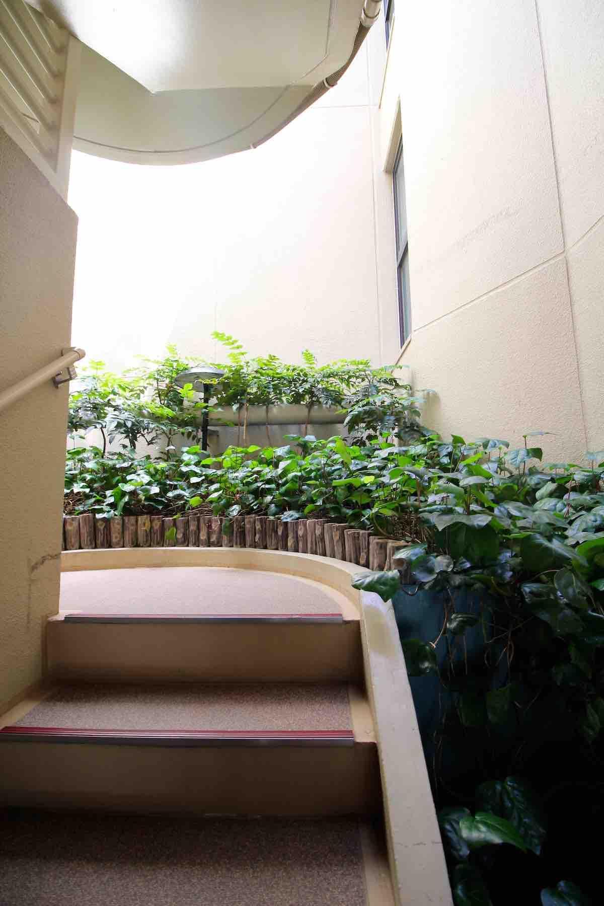 共用階段も緑がいっぱい