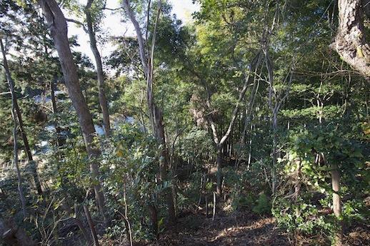 斜面を下った先に竹林の趣