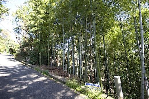 木漏れ日の竹林にみとれます