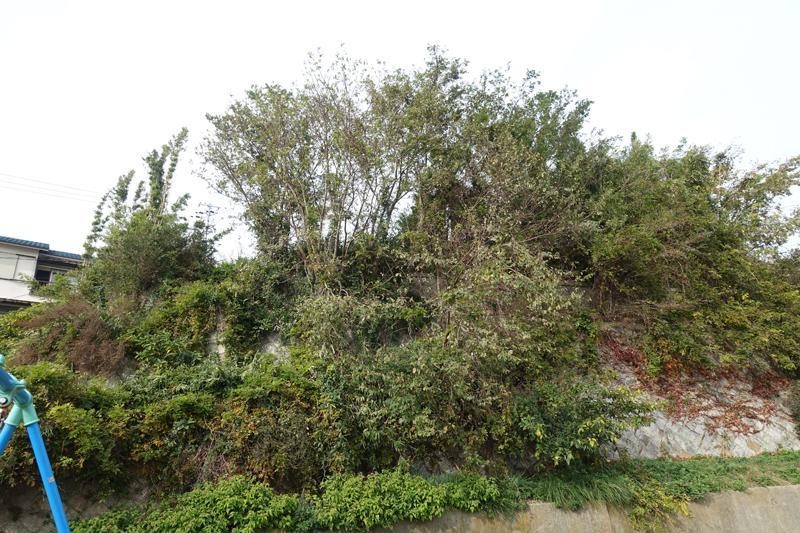 現在はぼっさりと木々が生えまくってます。