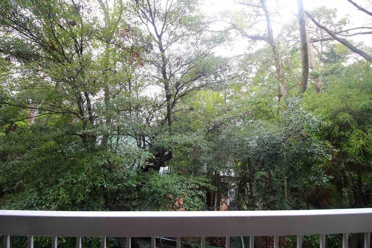ワサワサと溢れんばかりの緑樹と芦屋神社の本殿の裏側