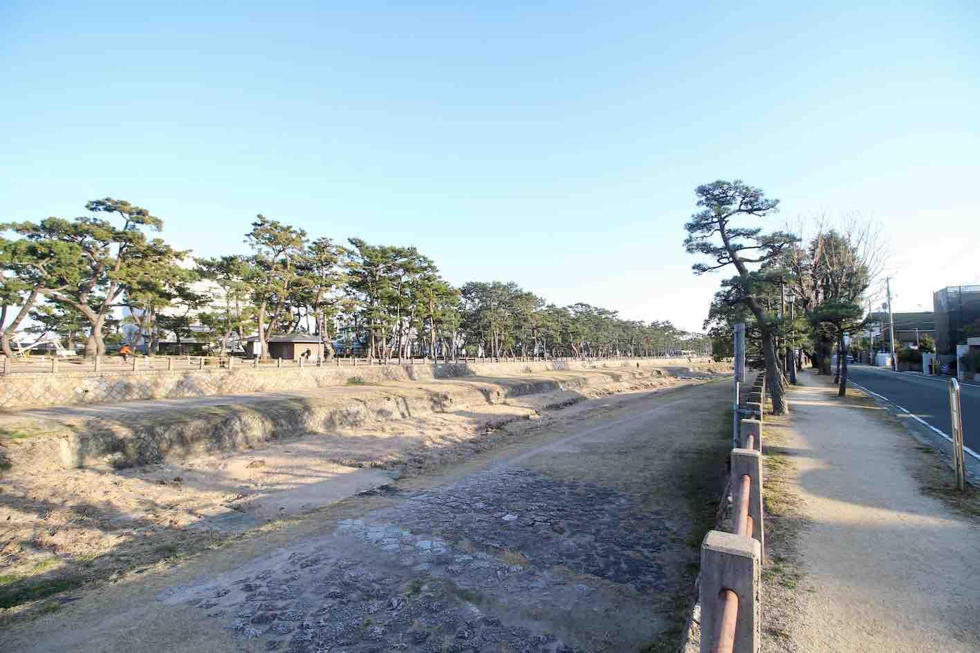 芦屋川沿いの松並木