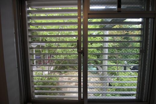 キッチンの窓から緑