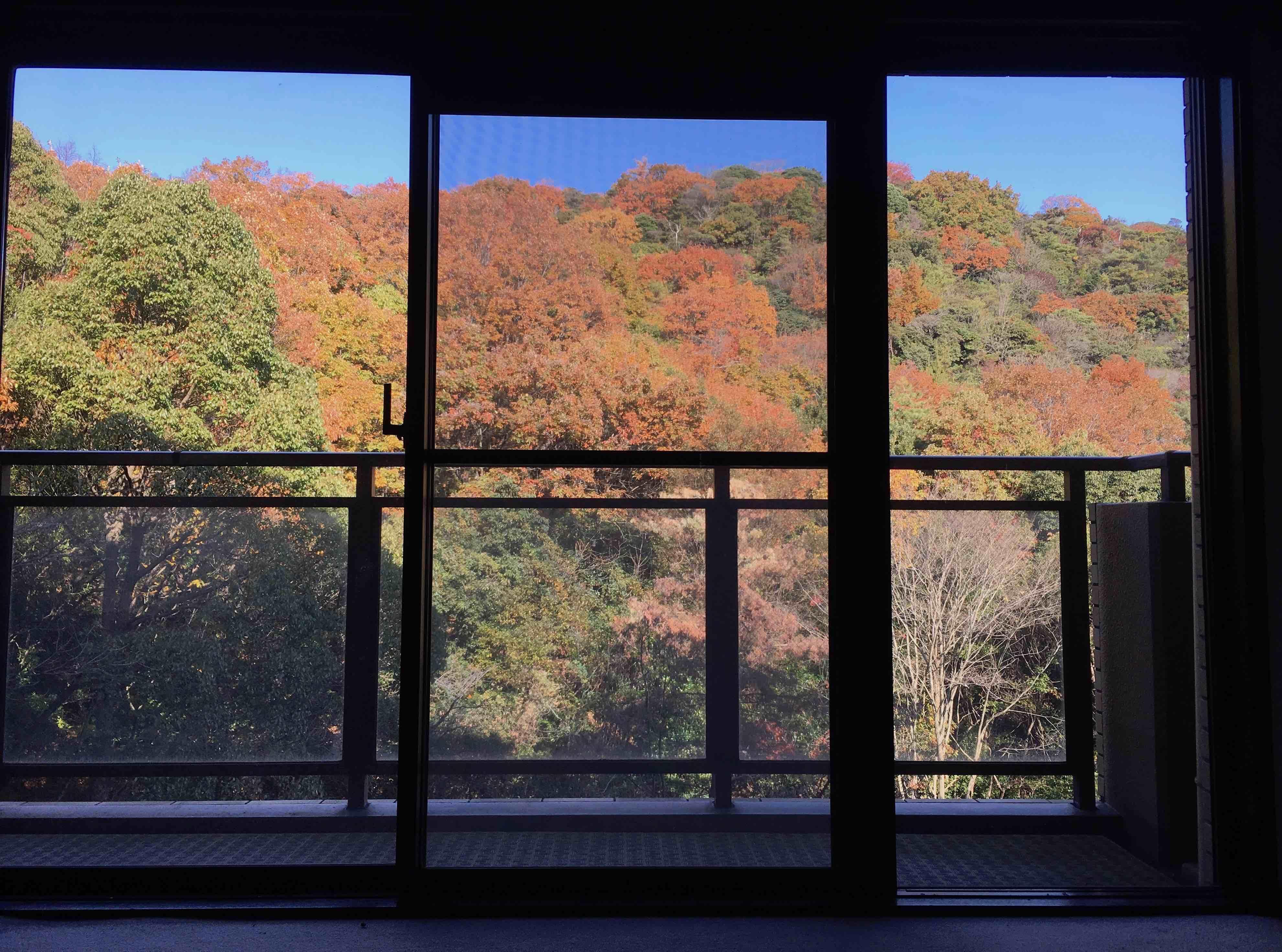 秋にはこんな紅葉も