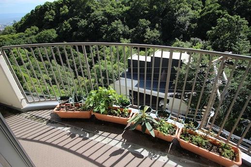 山頂のような海と山を見下ろすバルコニーで家庭菜園を楽しんじゃおう。