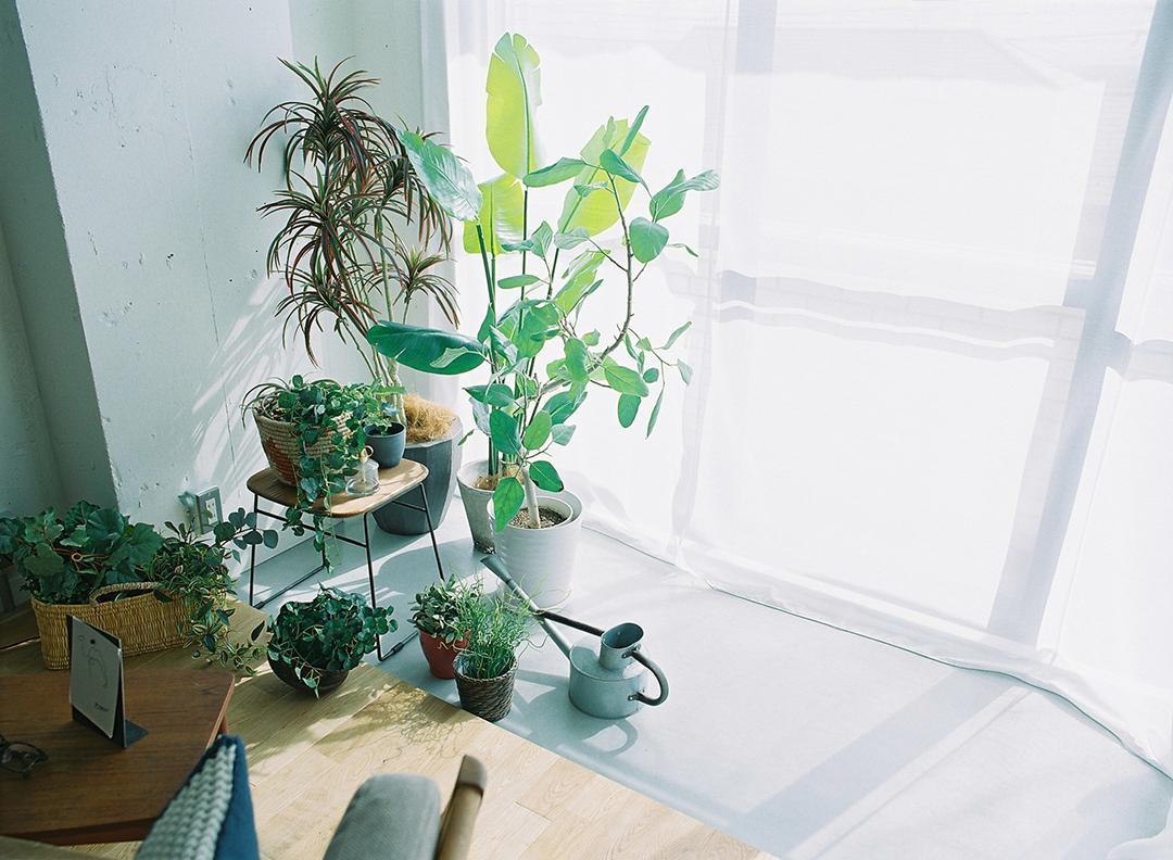 南向きバルコニーから暖かな陽が入るサンルーム。植物を育てるのに最適なスペース。
