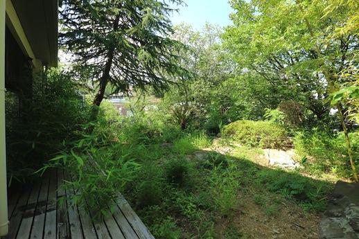 ウッドデッキーからリアルな山のような庭木を眺める