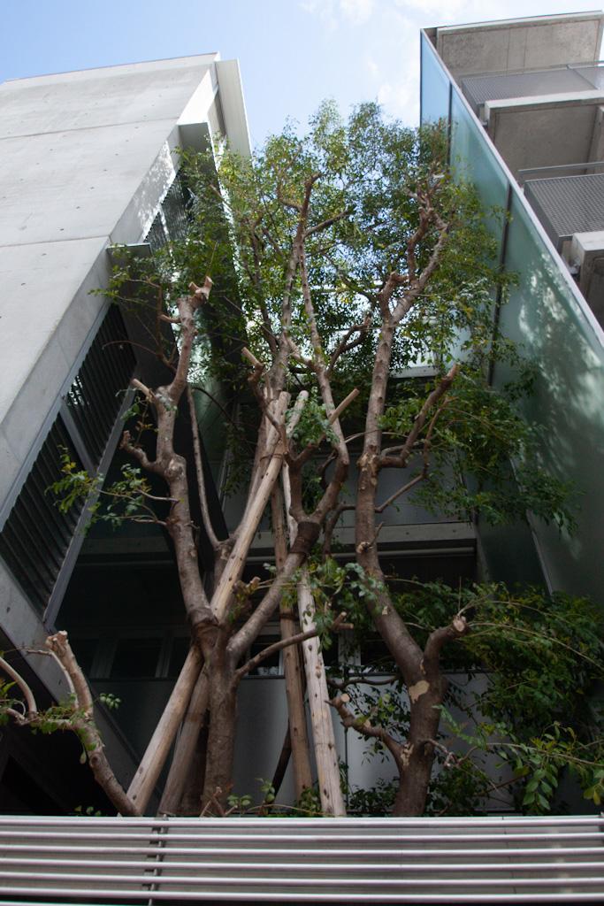 建物中央に背の高いシンボルツリー