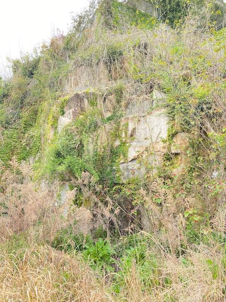 岩に植物が絡まる。圧巻。