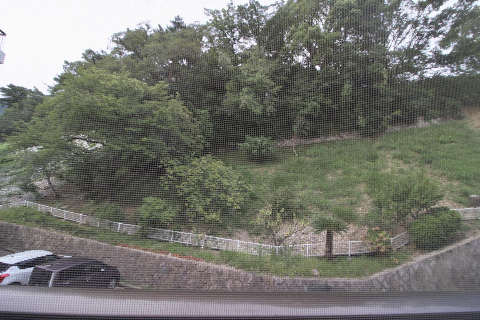 和室のからは裏山の緑が見えます