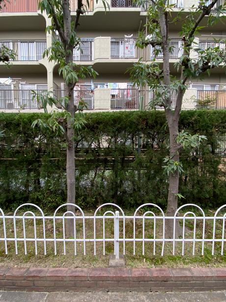 外の道からは庭は非常に見えにくいです