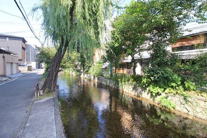 近くを流れる風情溢れる高瀬川