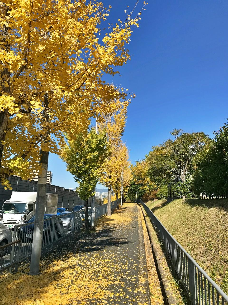 駅からの帰り道。四季折々の自然に出会える場所です