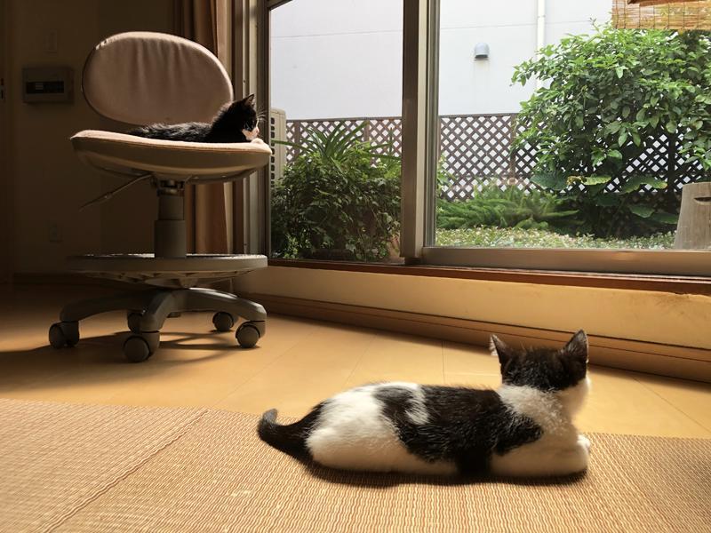 猫の手、借りられます。 (大阪市都島区網島町の物件) - 大阪R不動産