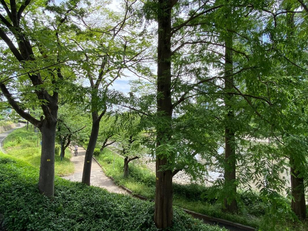 川辺に降りる道。木々が心地良いです。