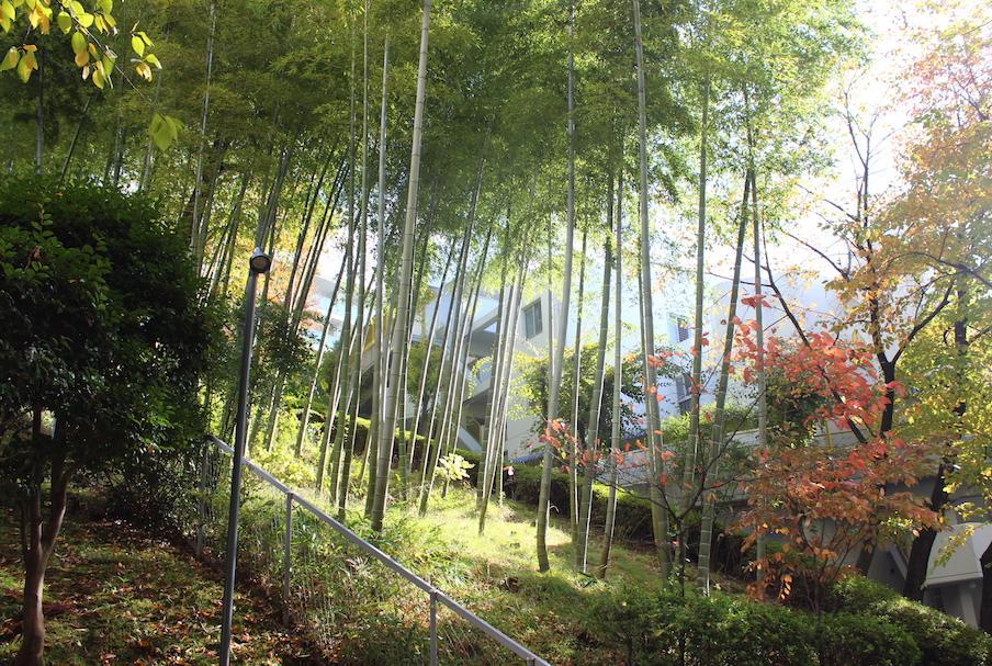 マンション裏の竹林 そよそよとした風の音が心地よいです(写真は過去撮影時のもの)