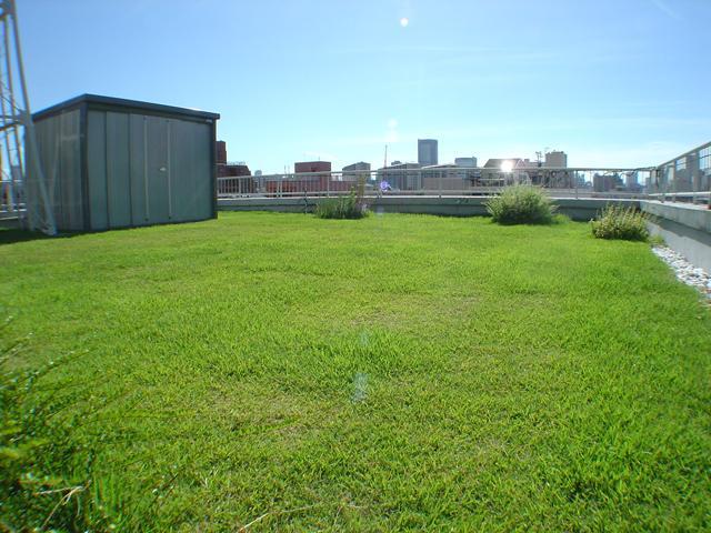 緑化された共用屋上が使えるようになりました。