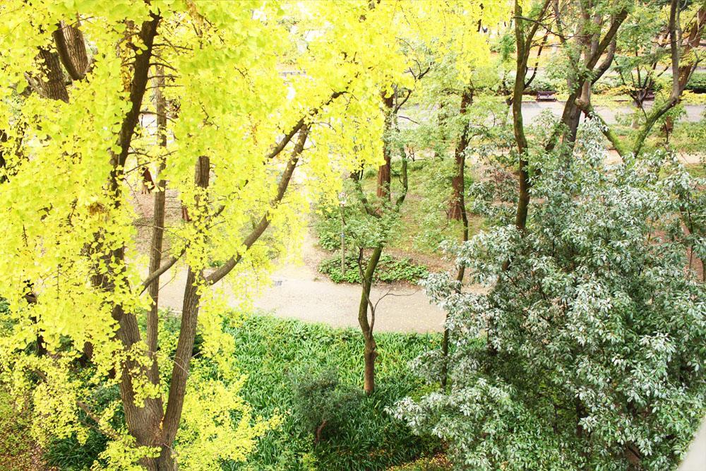 窓からは靭公園の緑(写真は過去撮影の6階からの眺望)
