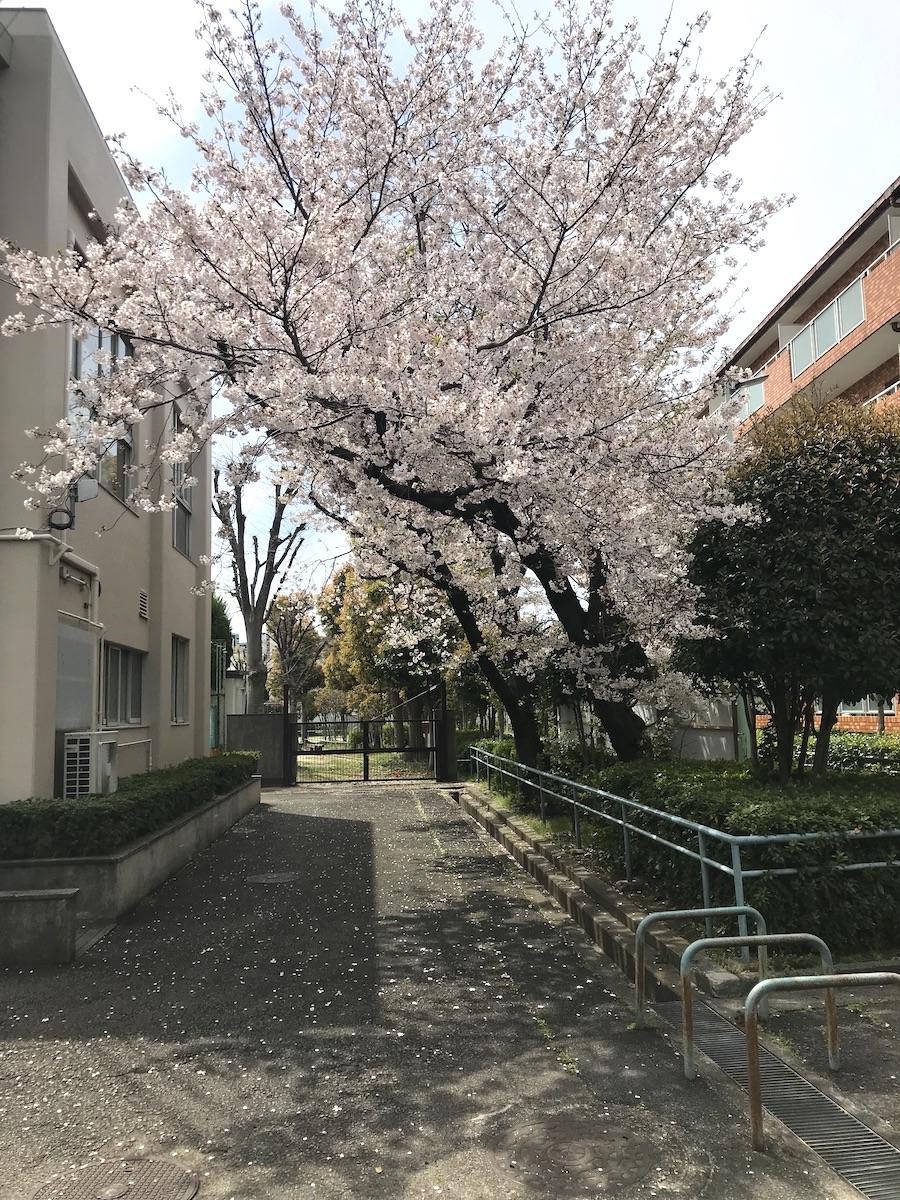 隣接する公園、春は桜が満開です。