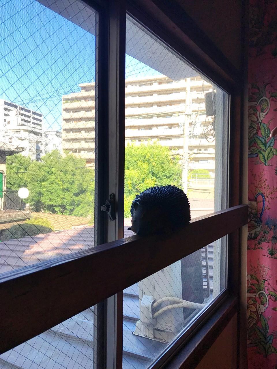 窓際にハリネズミが