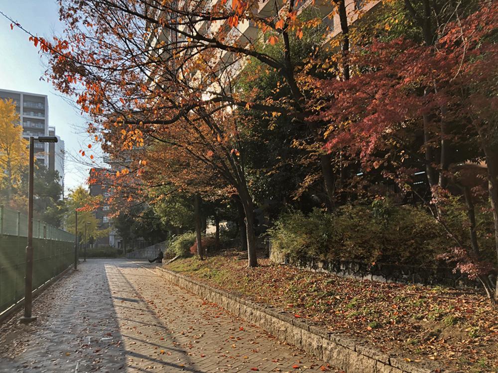 遊歩道と紅葉
