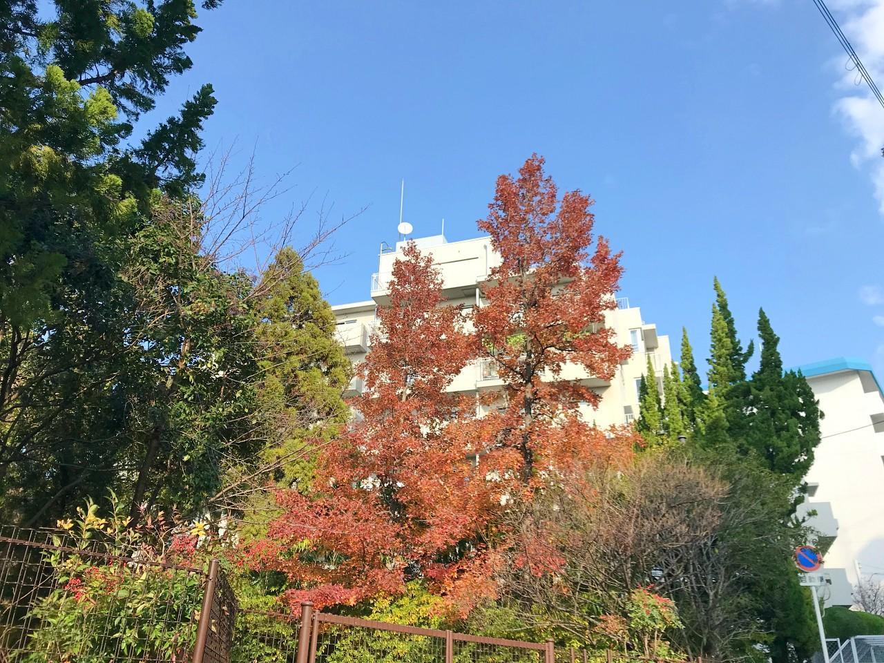 林の紅葉が映えます